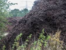 Amerikaanse trosbosbes blijft plaag voor Peel