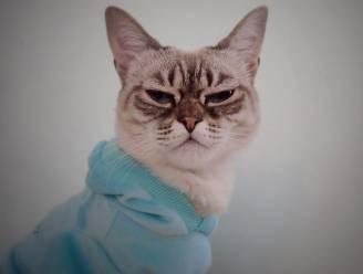 Grumpy Cat heeft concurrentie, maak kennis met Sauerkraut