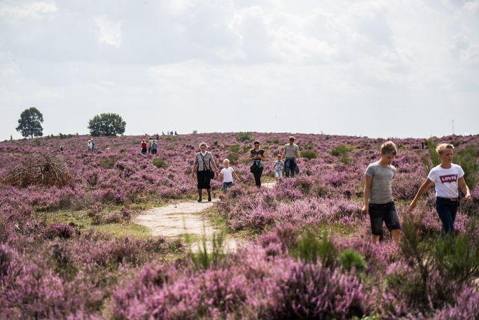 De Posbank in bloei trok afgelopen maand flink veel toeristen.