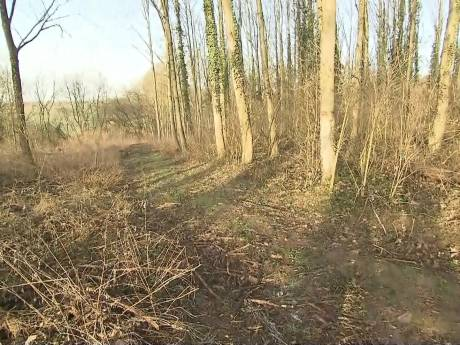 Ophef in Duitsland om tienermoord: 14-jarige steekt jongen (13) dood op bosweg