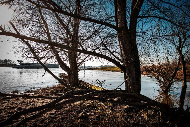 Rijkswaterstaat wilde de zieltogende riviernatuur een flinke oppepper geven. Beeld Koen Verheijden