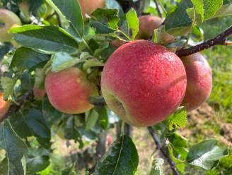 Fruitliefhebbers welkom op Latemse plukdag