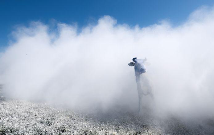 Des agriculteurs wallons ont épandu des centaines de kilos de lait en poudre, jeudi matin sur un champ à Braine-Le-Comte, pour manifester leur désaccord quant à la mesure européenne permettant le stockage privé de lait en poudre