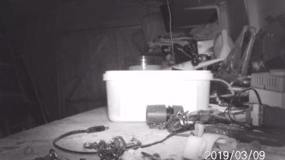 VIDEO. Man (72) ontdekt dankzij webcam wie zijn tuinhuis steeds opruimt: een muis