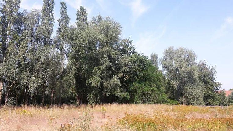 In dit gebied langs de Heulestraat in Gullegem moeten 100 bomen wijken.