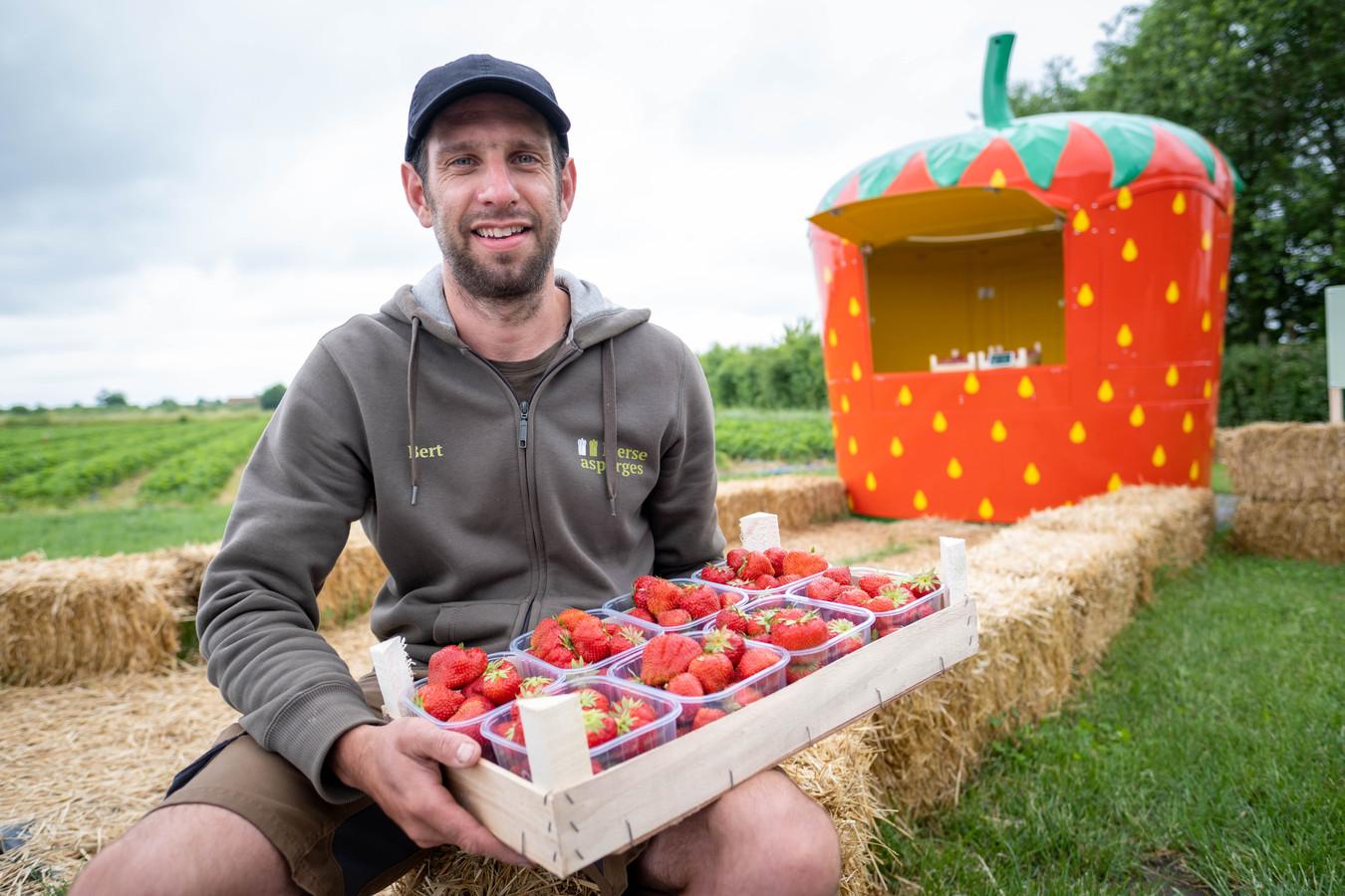 Bert Vercammen verkoopt Lierse aardbeien recht van het veld.