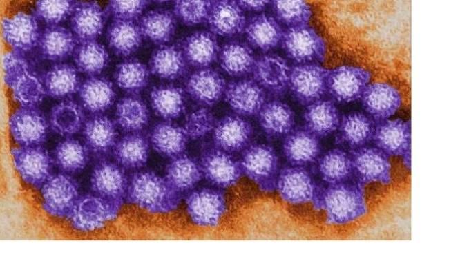 Bewoners 't Höfke in Beek in quarantaine vanwege angst voor norovirus