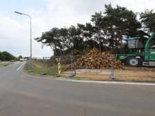 Gekapte bomen in Oirschot sowieso vervangen door groen