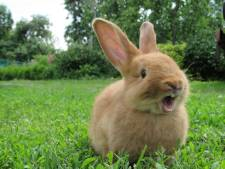 Grote konijnensterfte Drentse Dierenweide  Stroomdal