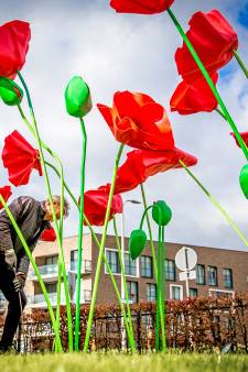 Kunstenaar plant metershoge kunst-klaprozen in Oud-Beijerland 'om mensen blij te maken'