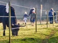 Kleine meerderheid denkt positief over grote grazers in Maashorst