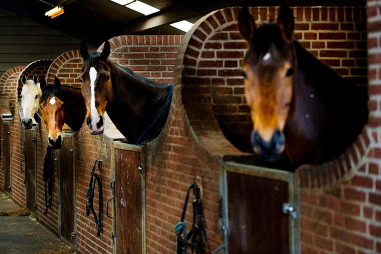 Er zijn sinds het virus om zich heen greep op een concours in Valencia vier paarden overleden.  Beeld ANP