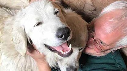Onbevreesde hond loodst met succes geitenkudde door bosbranden in VS