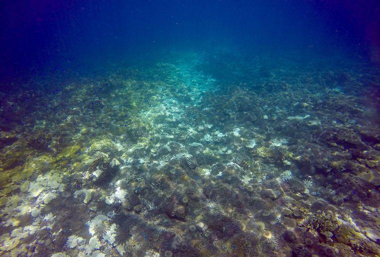 De afgelopen twee jaar heeft koraalverbleking grote schade aangericht aan het Great Barrier Reef.  Beeld REUTERS