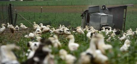 """""""La grippe aviaire est toujours présente sur le territoire"""""""