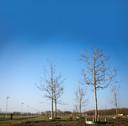 Het Vierdaagsebos, aangeplant in 2014, op een foto uit 2017.