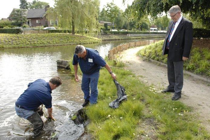 Met het plaatsen van waterplanten, onder toeziend oog van wethouder Ad van Beek, legde het waterschap gisteren de laatste hand aan de vijver in Dongen. Het onderzoek naar blauwalg is afgerond. Om nieuwe blauwalg te voorkomen, zijn er een paar 'do's en dont's' opgesteld voor de inwoners van Dongen. foto Jan Stads/Pix4Profs