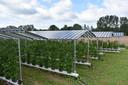 De zonnepaneleninstallatie boven het fruit van fruitkweker Maarten van Hoof.