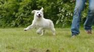 Gemeente zoekt oplossing voor hondenschool in Zelzate-West
