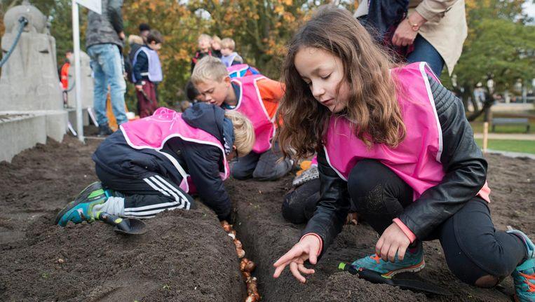 Kinderen van de Nicolaas Maesschool helpen bij het planten van tulpenbollen. Beeld Charlotte Odijk