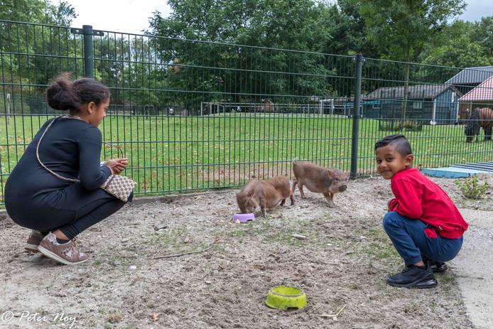 De nieuwe bewoners van de Kinderboerderij Uden