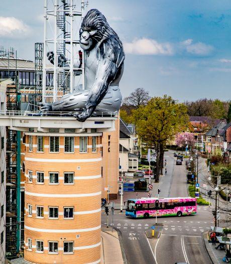 Zeldzame aap is terug in Apeldoorn