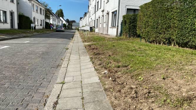 """Wijk Malem boos omdat typische haagjes nu al verdwijnen: """"Groendienst vindt het te veel onderhoudswerk"""""""