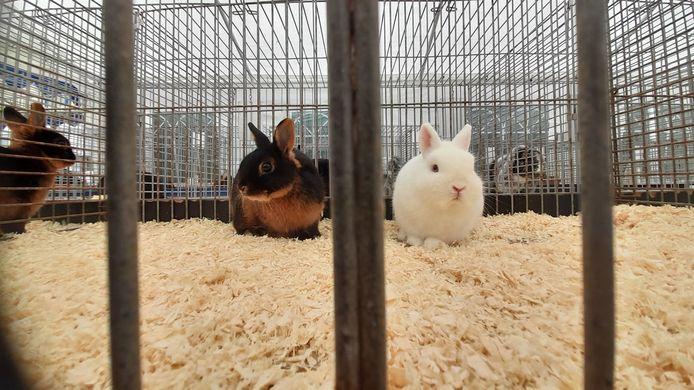 Twee konijnen bij de jongedierendag georganiseerd door de Eendracht