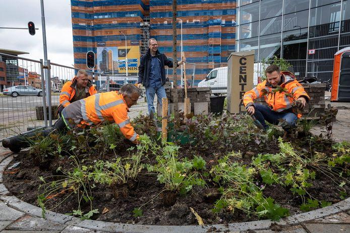 Vergroening Marconiplein, wethouder Rik Thijs (rechts) en Friso Geerlings (staand) helpen de mannen van groenbedrijf Donker Groen.