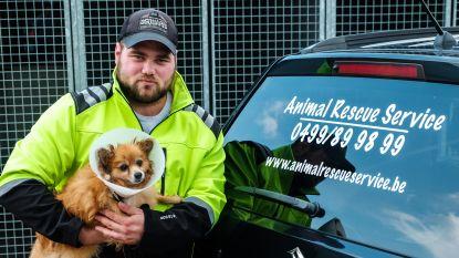 """Matthieu van vzw Animal Rescue Service verrast door het hoge aantal interventies: """"We kunnen een echte meerwaarde leveren"""""""