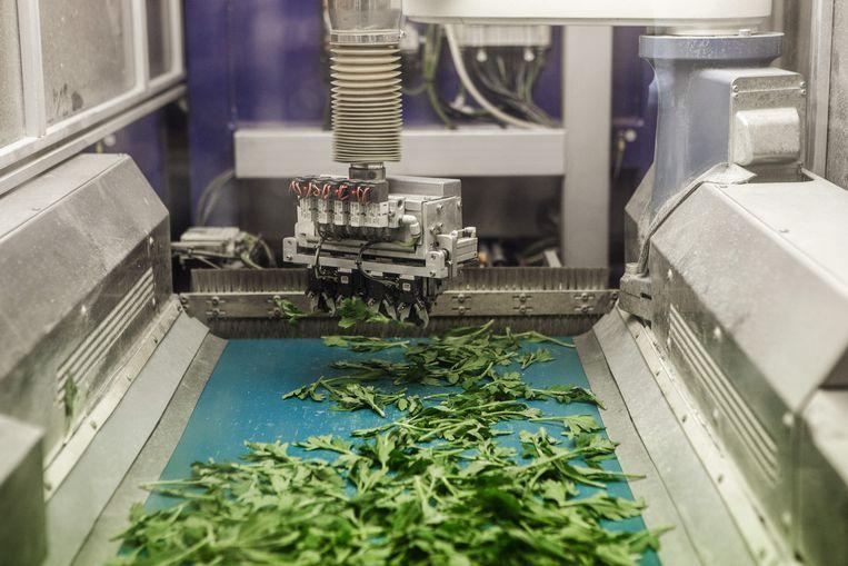 Artificiële intelligentie in de praktijk bij RoboVision: een robot kan niet enkel stekjes planten, maar leert zichzelf ook nieuwe planten te herkennen. Beeld Bob Van Mol