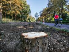 Kappen van boom blijft in Den Haag relatief goedkoop