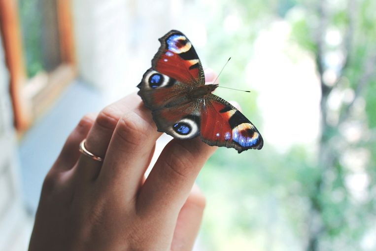 vlinders-herkennen-zo-doe-je-dat-en-zo-lok-je-ze-naar-je-tuin.jpg