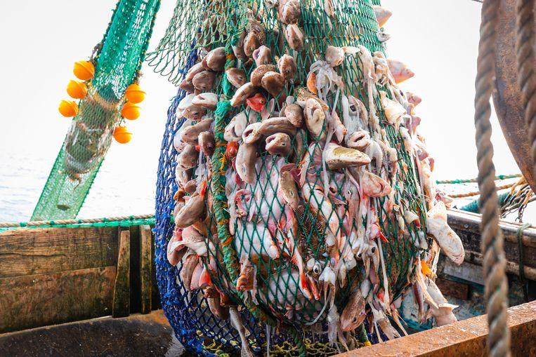 Vissers in het water bij Newhaven in het Verenigd Koninkrijk. Beeld EPA