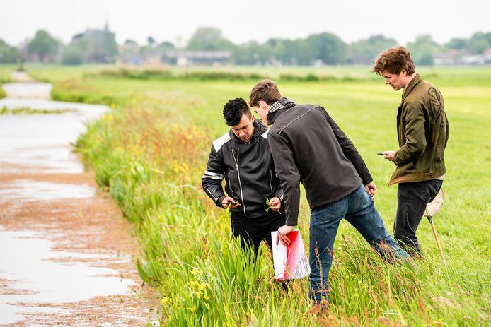 De studenten Devon, Arnoud en Mathijn onderzoeken de kruidenrijke slootkant.