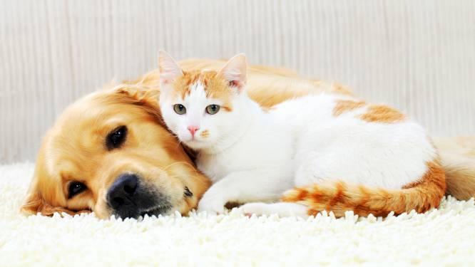 Le taux de contamination au Covid-19 des chats et chiens par leurs propriétaires est plus élevé qu'on ne le croit