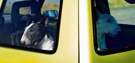Vrijwilligers Faunapark Flakkee redden twee honden uit hete auto op parkeerterrein