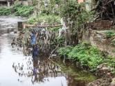 Les plantations intensives d'épicéas en Wallonie ont aggravé les inondations, selon le WWF