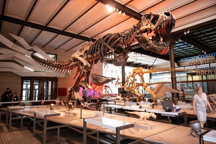 Een bezoekje aan het dinomuseum of baantjes trekken in een zwembad kon al, en mogelijk opent de regering straks ook de vakantieparken en dierentuinen.