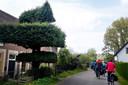De oplettende fietser ziet bij een woonboerderij een opvallend gesnoeide boom. Sinds jaar en dag wordt de boom gesnoeid in de vorm van een paard. Al moet de boom hoognodig weer gesnoeid worden.