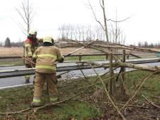 Omgewaaide boom blokkeert deel Boxtelseweg en fietspad bij Schijndel