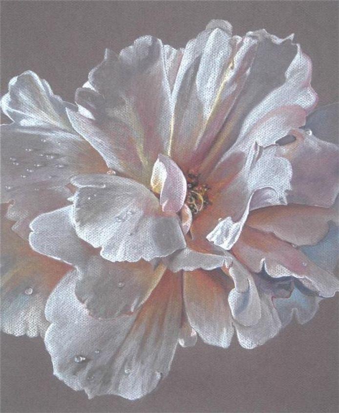 Fragiel portret van een witte roos met dauwdruppels. De lievelingsbloem van Astrid van Leest.