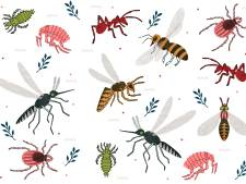 Bierdrinkers worden vaker gestoken door muggen, en andere weetjes over beestjes