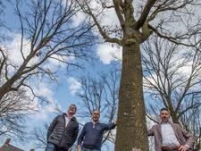 Mannen uit Beek en Donk zien dagelijks de bomen die ze als jongens plantten