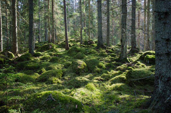 Bos in Zweden. Spirituele groei en tantrabeoefening zouden hier het best tot hun recht komen.