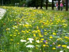 Boeren gaan zaaien: Liemerse akkerranden staan straks vol bloemen