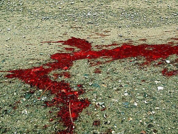 De stier liet een bloedspoor achter toen hij achter een tractor werd gebonden.