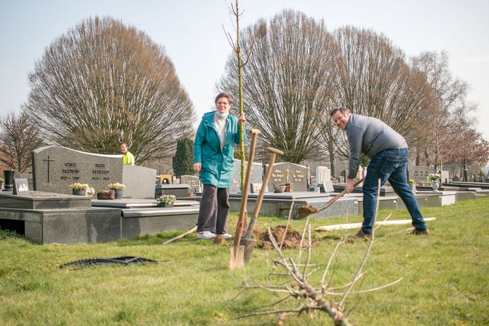 Schepenen Sofie Heyrman en Wout De Meester helpen een boompje planten.