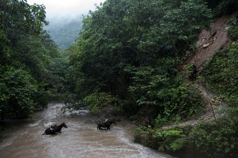 The bridge to Rio Mina has collapsed so the mules have to travel through the river. Beeld Stephen Ferry