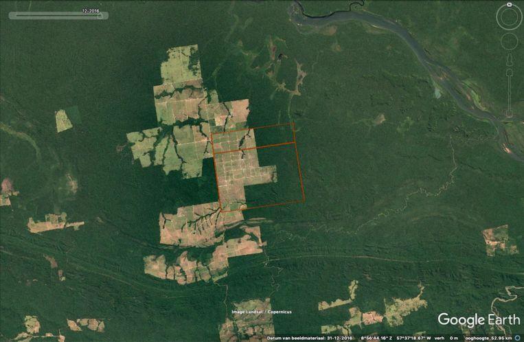Boeren kappen stukken regenwoud in het Braziliaanse Amazonegebied. Beeld Pointer